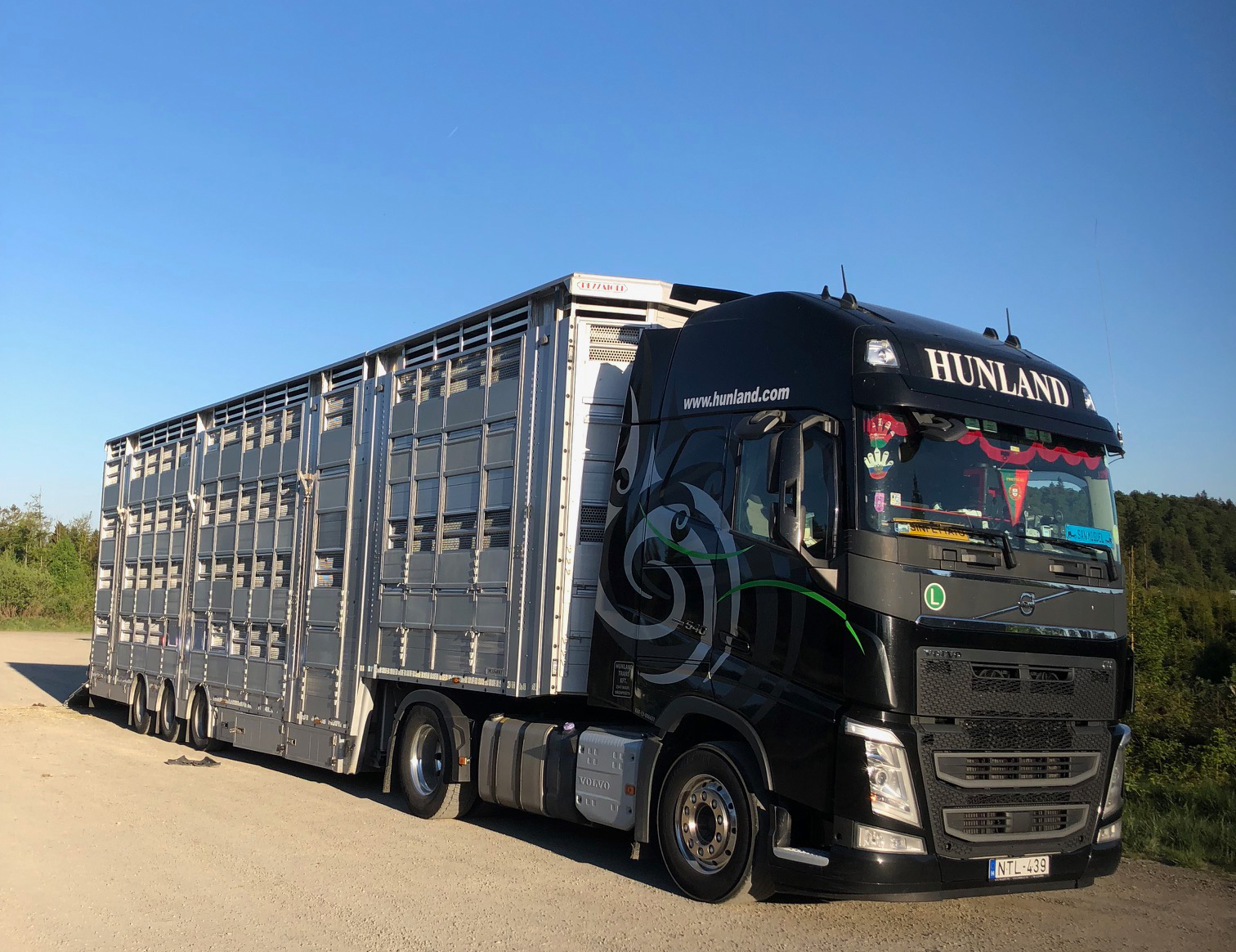 Transporter mit vier Jungbullen auf dem Weg nach Rumänien zur Gründungsgeneration eines neuen Artenschutzprojektes