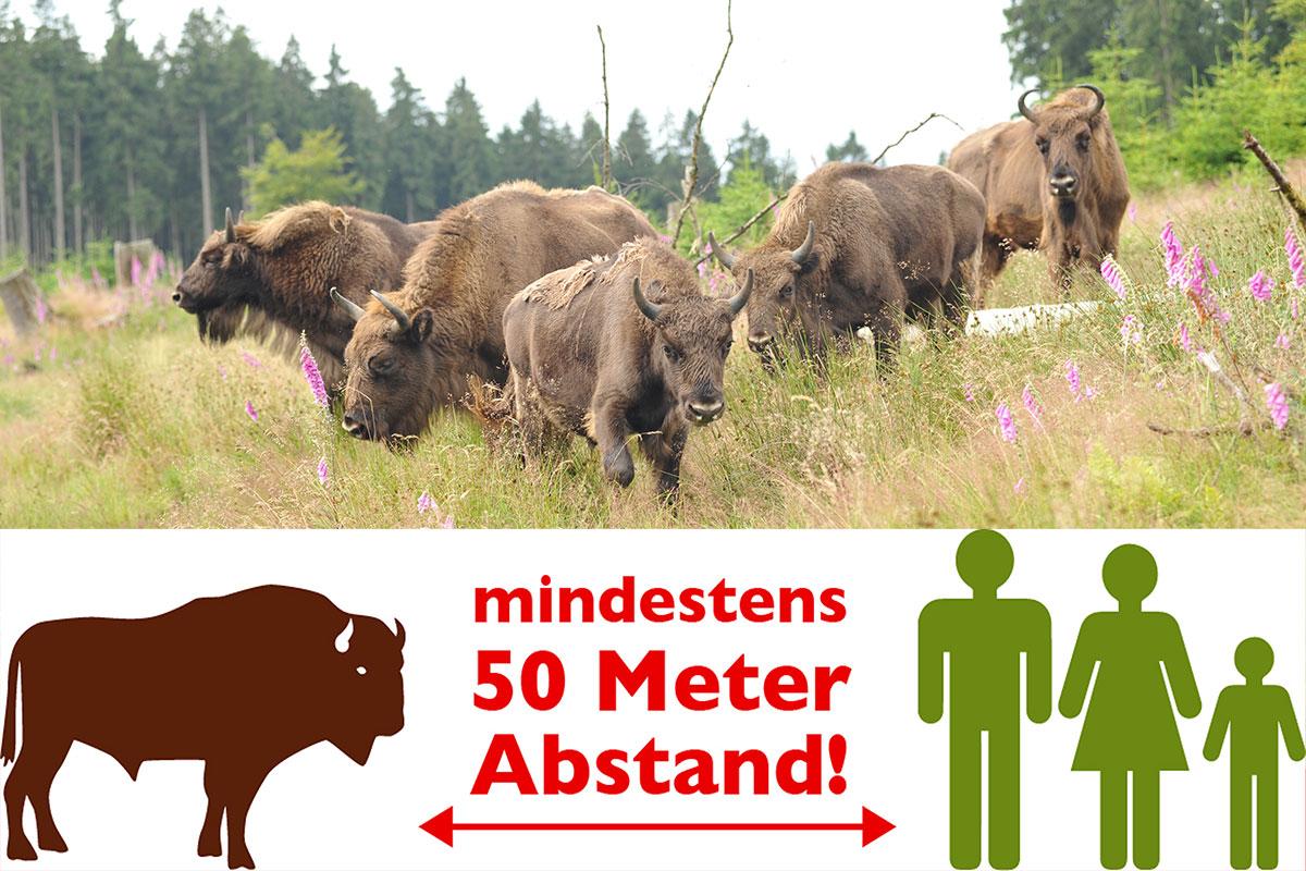 Wisente in der Wisent-Wildnis mit dem mit Hinweis 50 Meter Abstand zu halten
