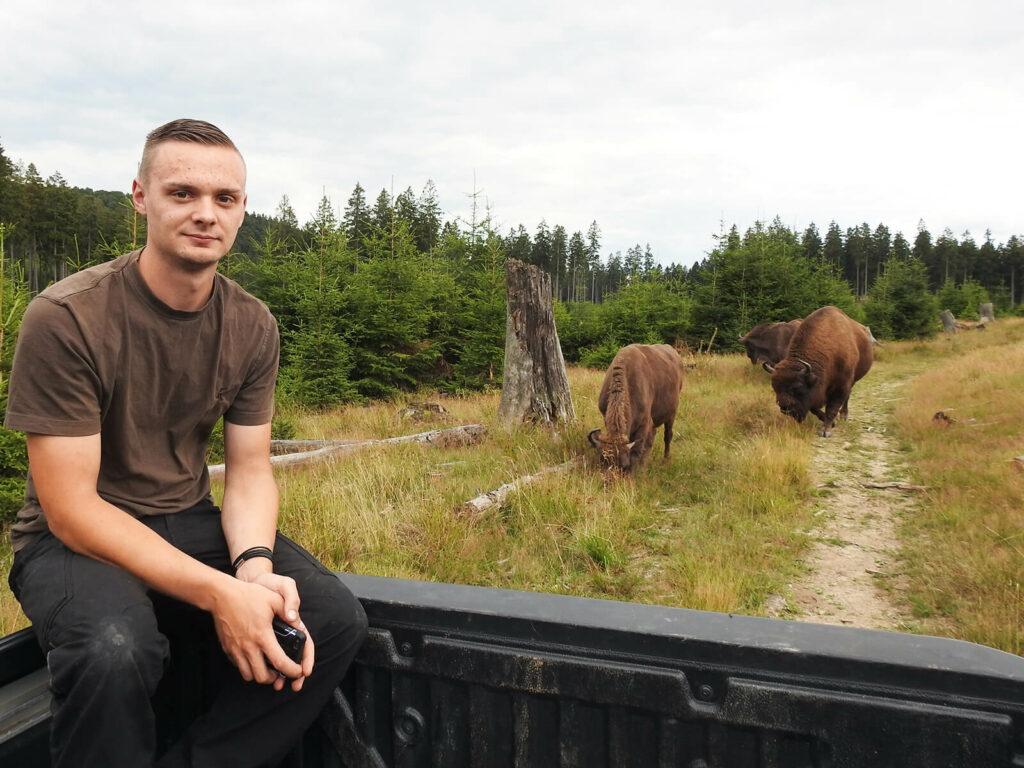 Wisent-Ranger Henrik Trapp auf der Ladefläche des Pick-ups mit Wisenten im Hintergrund