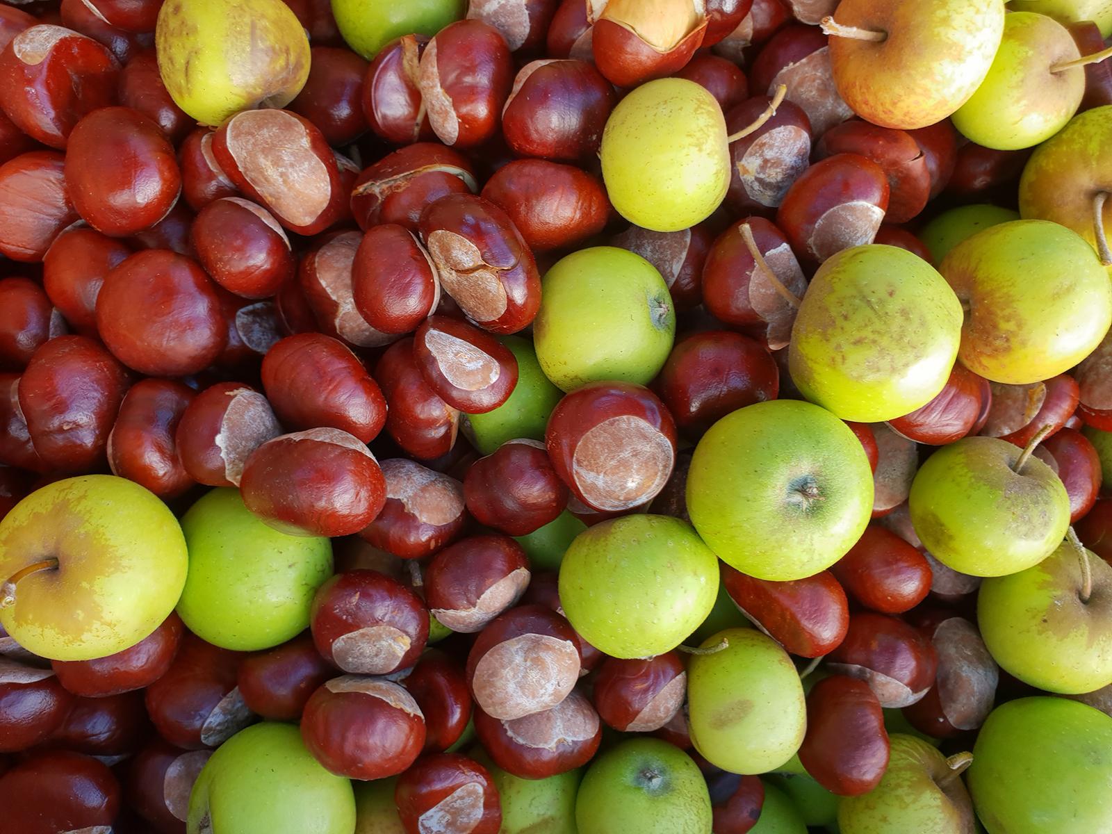 Nahaufnahme von Kastanien und Äpfeln