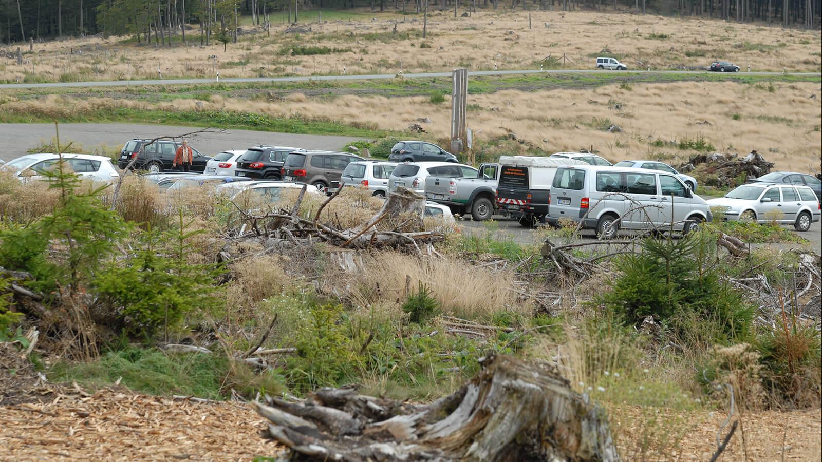 Der Parkplatz der Wisent-Wildnis wird teilweise als Lagerplatz für Baumstämme genutzt