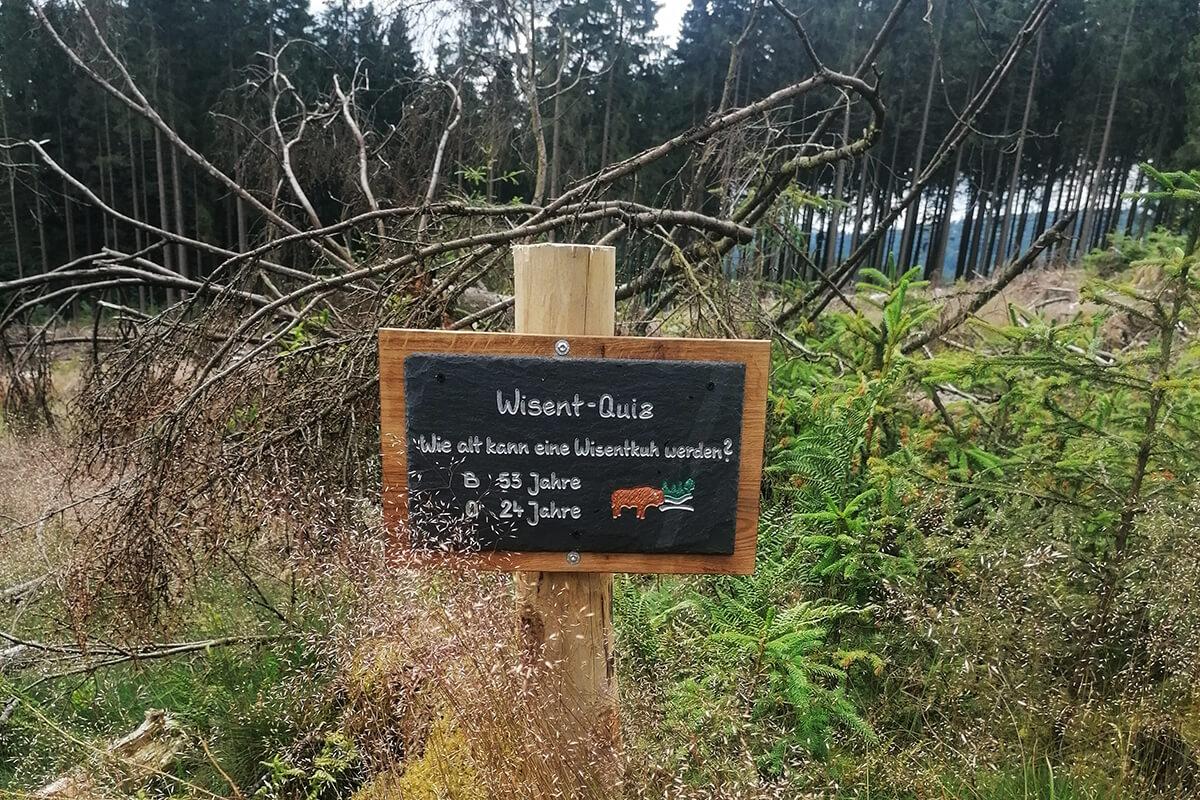 Wisent-Quiz-Schild im Wald in der Wisent-Wildnis am Rothaarsteig